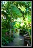 The Umlilo Jungle - by Gill