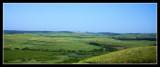 Sugar Cane Fields - by Gill