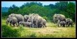 Part of the large Herd - by Douglas