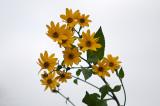 9 ft flowers