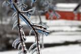ice storm 2011