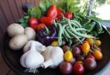 todays very nice harvest