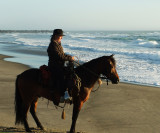 Quincey four year old paso fino