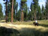 Riding through  logged land
