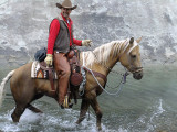 The English Cowboy