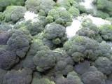 broccoli 294.jpg
