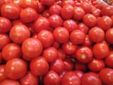 tomatos 295.jpg