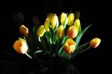 tulips 302.jpg