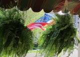 New summer flag and ferns 426.jpg