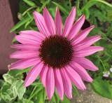 pink 526.jpg
