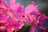pink 603.jpg