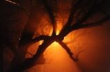 street light and fog original 852.jpg