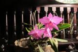pretty little pink 853.jpg
