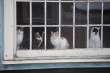 where is Sally she needs to be in her window pane 857.jpg