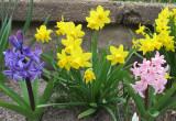 Spring has arrived 892.jpg