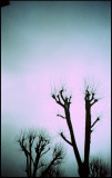 bare tree tops against a darkening sky