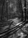 infra 8 woodland