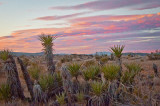 Sunset Over the Yucca
