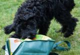 pbase Piper with shopping bag 2 April 15 2012_.jpg