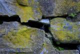 pbase fungus web  May 26 2012_.jpg