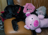 pbase java with his current toys  May 28 2012_.jpg