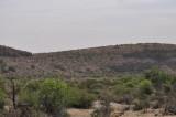 Gray Vireo habitat