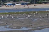 Short Beach low-tide in Stratford, CT,  U.S.A.