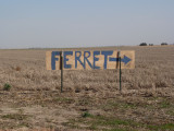 Black-footed Ferret Festival