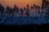 DSC_9313-munnar-sunset.jpg