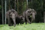 DSC 30041 wild elephants.JPG