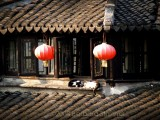 Two cats on clay roof.JPG