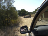 Rhino road block in Kruger