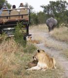 Rhino vs lion standoff