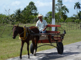 Horse cart taxi