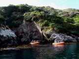 1 Snares Islands P1060954.jpg
