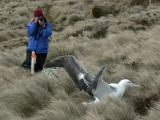 Phyllis and Southern Royal Albatross
