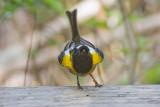 Stitchbird display