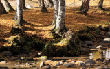 XinJiang - Hemu Trees and Reflection Sep 10