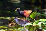 Fancy Bird In Tortuguero Selva