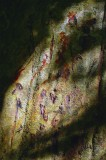 Mysterious Script On Blood Tree... Jungles Of Tortuguero