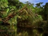 Deep In Jungles Of Tortuguero Selva