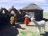 Aymara Lady With Alpacas, Sillustani