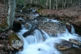 Williams River Feeder Stream Late Winter Scene tb0311sgr.jpg