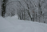 S-Curve Winter Scene Camp Splinter Rd tb0311slr.jpg