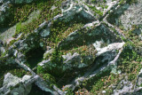 Honey Comb Rock Formation South Elk Mtn tb0711err.jpg