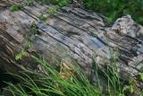 Large Hemlock Log along Williams River Basin tb0911kux.jpg