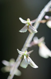 Sunny Smalli Orchid Blooms in Cranberry Glades v tb0711esr.jpg