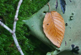 Rock Tripe Moss and Leaf on Mtn Sandstone tb0911xpf.jpg