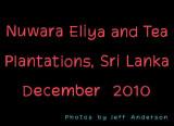 Nuwara Eliya, Sri Lanka and Tea Plantations (December 2010)