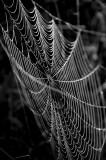 cobweb v.jpg